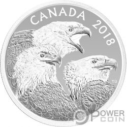 MAGNIFICENT BALD EAGLES Magnificas Aguilas Calvas 1 Oz Moneda Plata 15$ Canada 2018