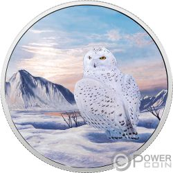 SNOWY OWL Gufo Nevi Arctic Animals Northern Lights 2 Oz Moneta Argento 30$ Canada 2018