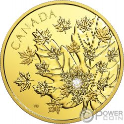 MAGNIFICENT MAPLE Hoja Arce 3 Oz Moneda Oro 250$ Canada 2018
