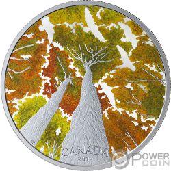 GOOSE Ahornblatt Canadian Canopy 2 Oz Silber Münze 30$ Canada 2019