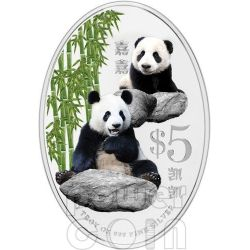 GIANT PANDA Commemorative Silver Proof Colour Coin 5$ Singapore 2012