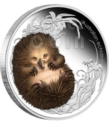 ECHIDNA FORMICHIERE SPINOSO Spiny Anteater Bush Babies II Moneta Argento 50c Australia 2013