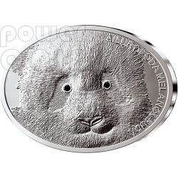 GIANT PANDA Fascinating Wildlife Silver Coin 10$ Fiji 2013