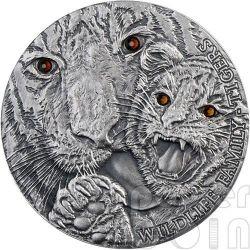 TIGRI Tigers Wildlife Family Panthera Tigris Moneta Argento 1$ Niue 2013