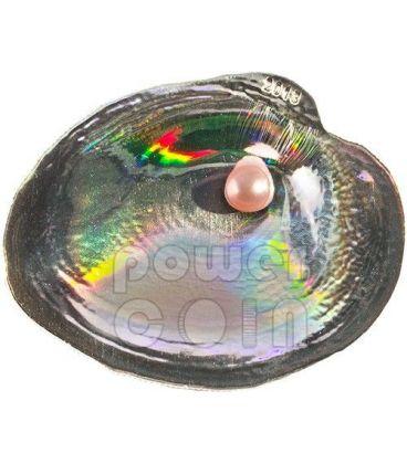 CYRTONAIAS TAMPICOENSIS Shells of the Sea Hologram Convex Silver Coin 5$ Palau 2013
