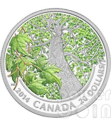 CANADIAN MAPLE CANOPY Primavera Spring Foglia Acero Moneta Argento 20$ Canada 2014