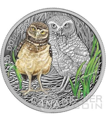 BABY BURROWING OWL Colored 1 oz Silver Proof Coin 20$ Canada 2015
