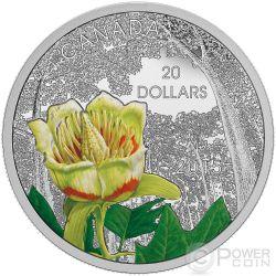 CAROLINIAN TULIP TREE Forest of Canada Silver Coin 20$ Canada 2015