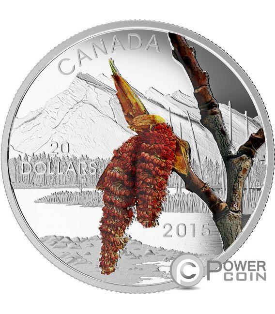 BOREAL BALSAM POPLAR Pioppo Forest Of Canada Moneta Argento 20$ Canada 2015