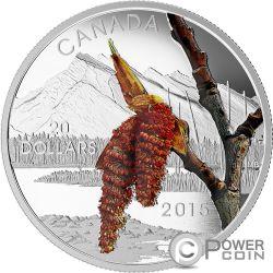 BOREAL BALSAM POPLAR Forest Of Canada Silver Coin 20$ Canada 2015
