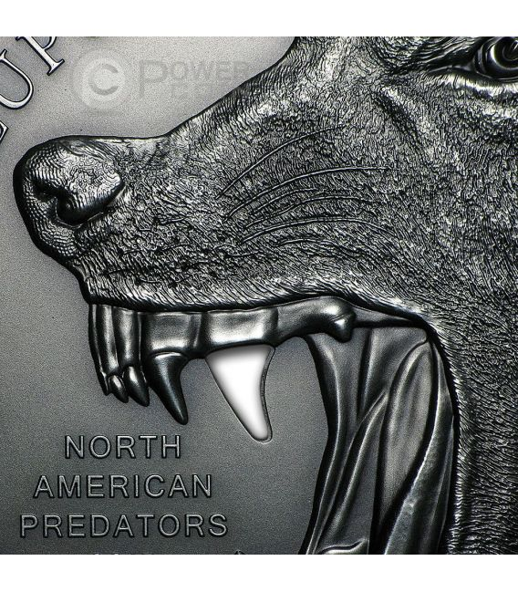 CANIS LUPUS Gray Wolf Ceramic Canine Tooth North American Predators 2 Oz Silver Coin 10$ Cook Islands 2015