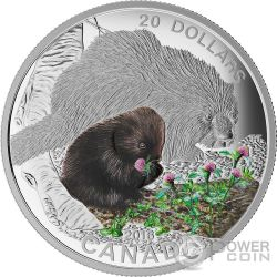 PORCUPINE Baby Animals Proof Silver Coin 20$ Canada 2015