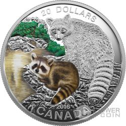 RACCOON Baby Animals Procione Moneta Argento 20$ Canada 2016