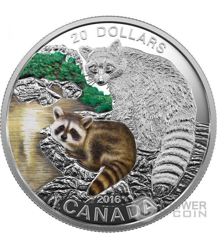 Raccoon Baby Animals Silber Münze 20 Canada 2016 Power Coin