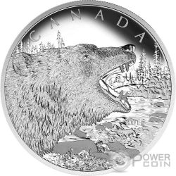 ROARING GRIZZLY BEAR Wild Series 1/2 Kg Kilo Silver Coin 125$ Canada 2016