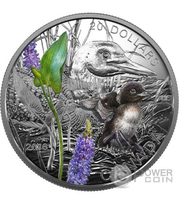 COMMON LOON Baby Animals Silver Coin 20$ Canada 2016