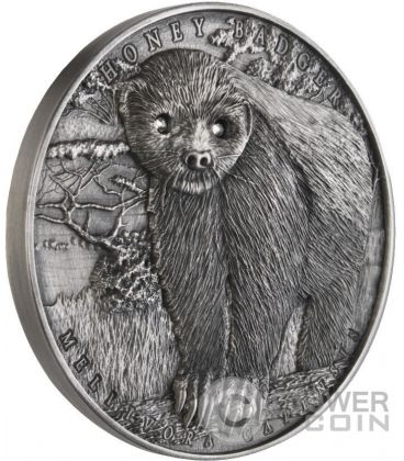 HONEY BADGER Mellivora Capensis Brave Animals 2 Oz Silver Coin 2$ Niue 2015