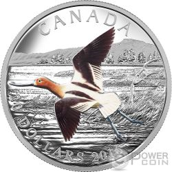 AMERICAN AVOCET The Migratory Birds Convention 100 Years of Protection Silber Münze 20$ Canada 2016