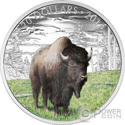 BENEVOLENT BISON Majestic Animal Silber Münze 20$ Canada 2016