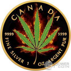 BURNING MARIJUANA SATIVA Maple Leaf Fire 1 Oz Moneda Plata 5$ Canada 2016