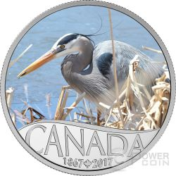 GREAT BLUE HERON Ardea Celebrating 150th Anniversary Silver Coin 10$ Canada 2017