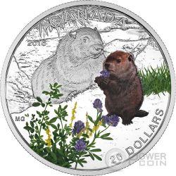 WOODCHUCK Marmotta Baby Animals Moneta Argento 20$ Canada 2016