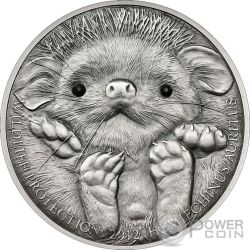LONG EARED HEDGEHOG Wildlife Protection Silver Coin 500 Togrog Mongolia 2012