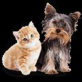 Katzen Hunde