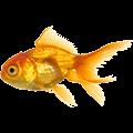 Fische Leben im Meer
