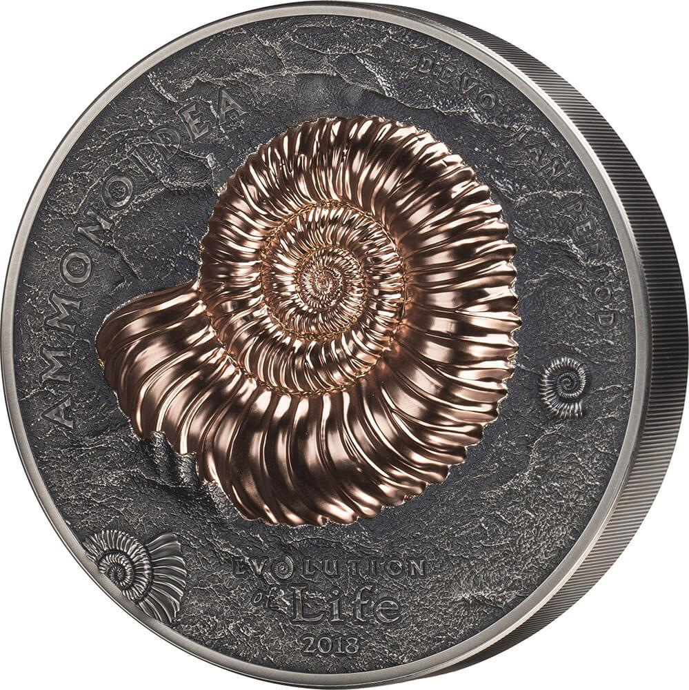 Ammonite reverse